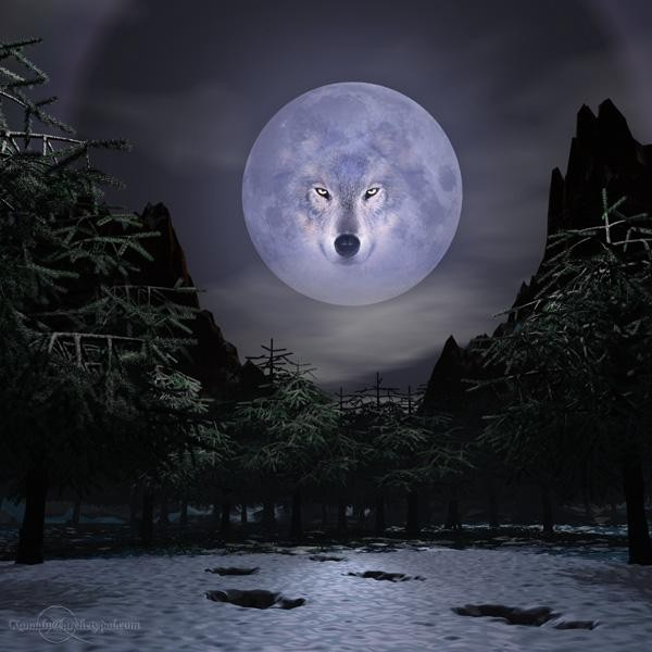 the moon wolf