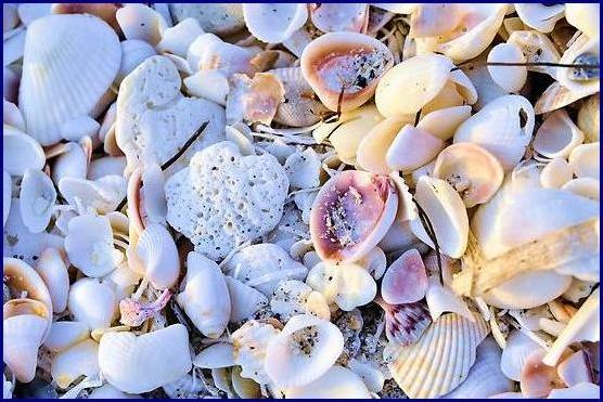 Sea Shells @ sunset