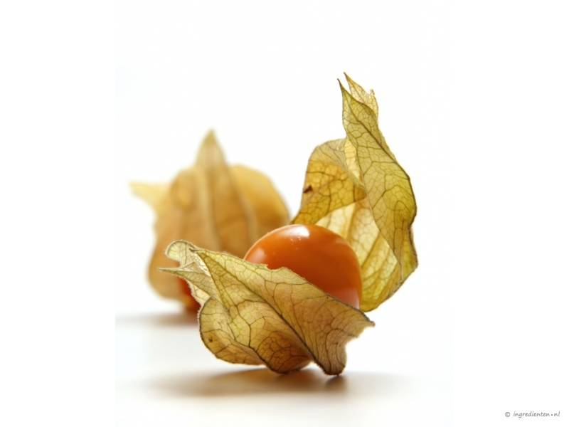 Super Physalis | Smulweb.nl &TF_57